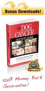 Dog Cancer Survival Guide Kit
