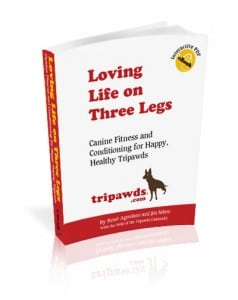 Learn gentle stretch and exercise fitness tips for your three-legged Tripawd dog.