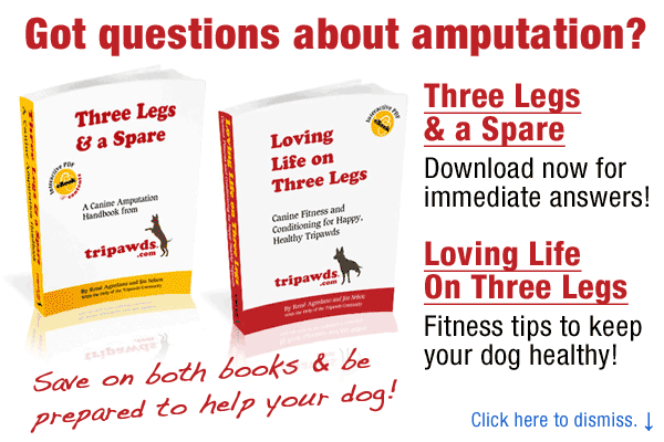 Tripawds E-books Answer Most Common Dog Amputation Questions!