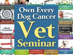 dog cancer guide