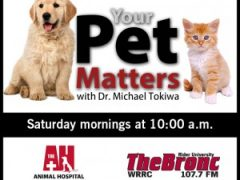 Your Pet Matters