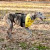 DIY Tripawd exercise fitness tips
