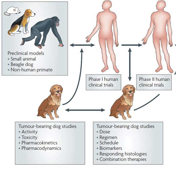 Clinical Studies in Pets and Humans