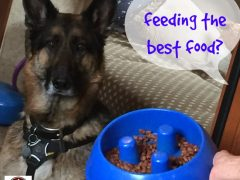 dog and cat cancer diets