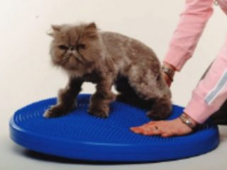 core strengthening for cats