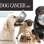 Dog Cancer Diet Guide