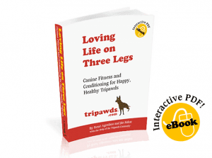 Loving Life On Three Legs Dog Rehab Ebook