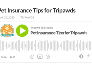 pet insurance podcast