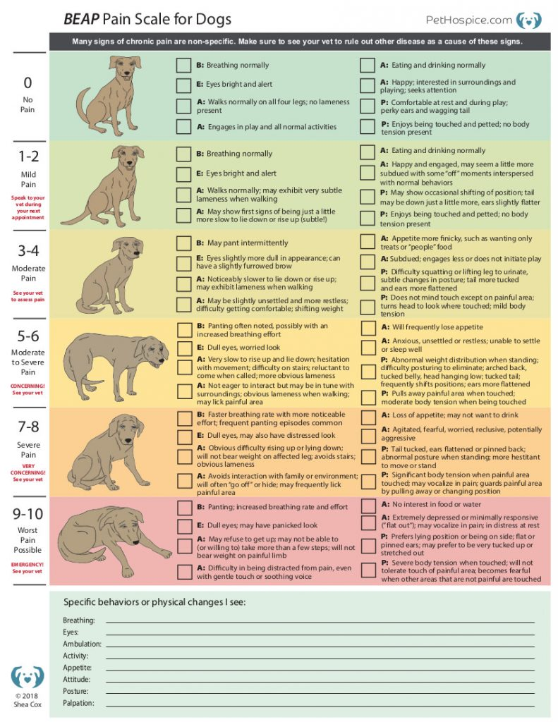 BEAP Pain Signs for Dogs