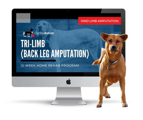 Canine Rehab On Demand for Tripawds