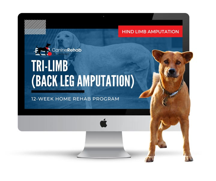 Rear leg amputee Tripawd home exercise
