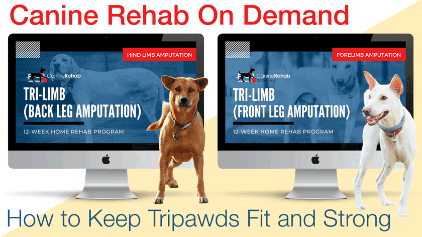Tripod dog exercise and fitness guide